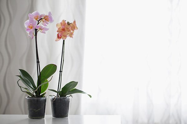 Orchid Care Top Tips For A Healthy Plant