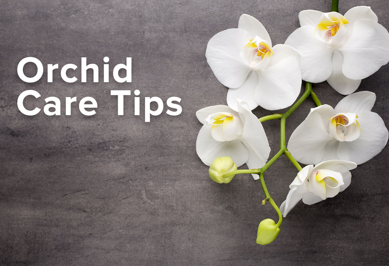 Orchid care top tips for a healthy orchid plant How do you care for orchids after they bloom