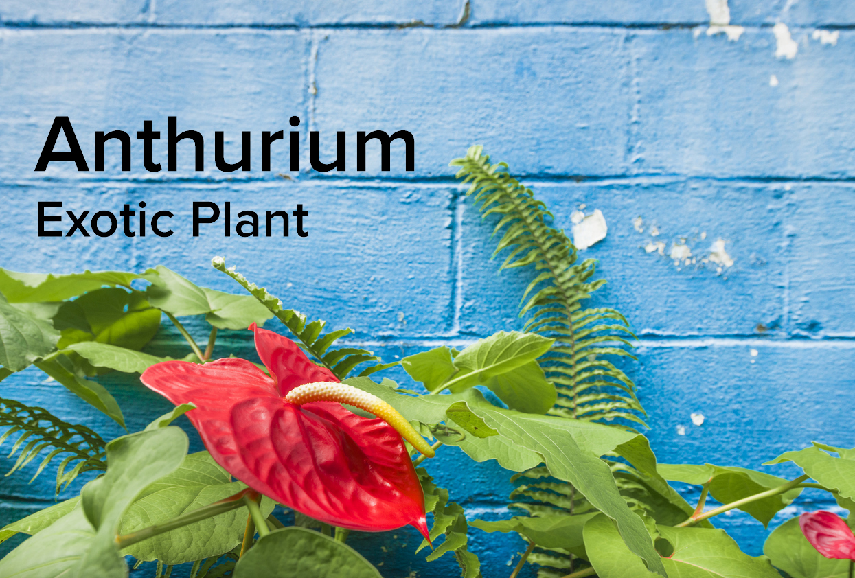 Tropical Flowers And Ferns In Hawaii With Blue Wall Background
