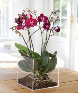 Billedresultat for healthy orchid