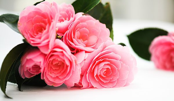 10 Most Romantic Flowers For The Woman You Love