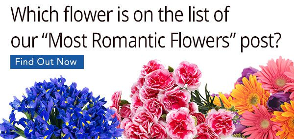 How to Find the Best First Date Flower? (Tips & Suggestions)