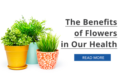 Infographic- Health Benefits of the Flowers