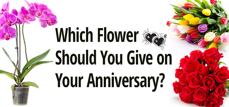 Flowers to Give on Anniversary