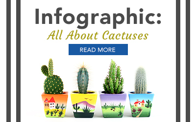 Infographic- Cactus Care