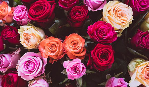 gorgeous range of colors- roses