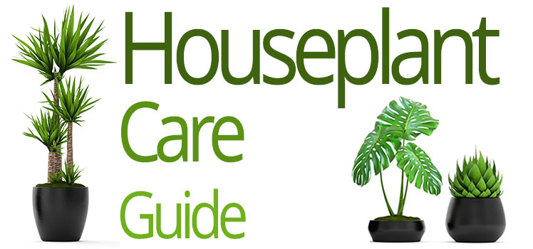 Indoor plants care guide | bouqs blog.