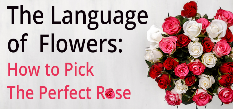 LolaFlora-Pick the Perfect Rose
