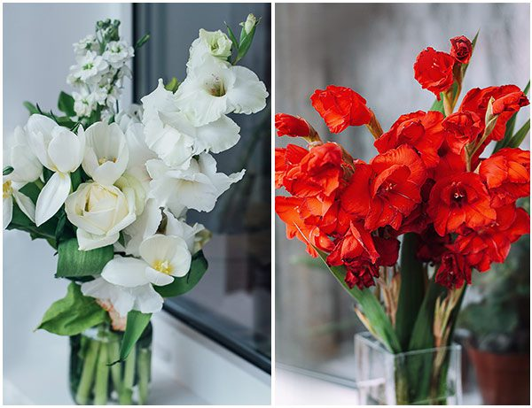 LolaFlora Gladiolus-White and Red