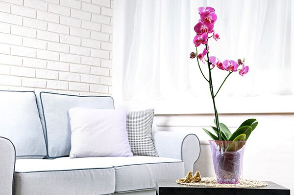 Orchid Care Rules