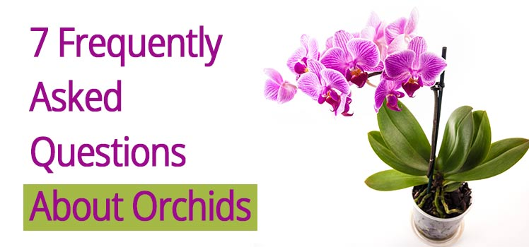 Orchids Care-Asked Questions
