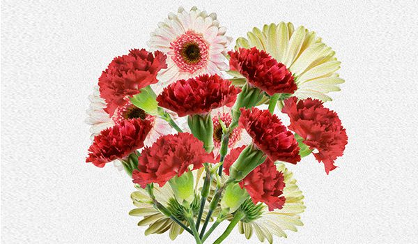 Carnations Bouquets