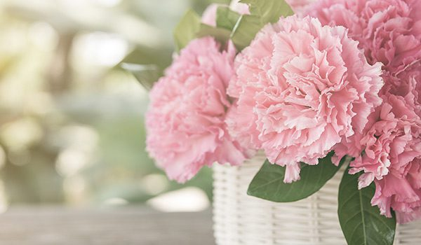 Carnations Pink