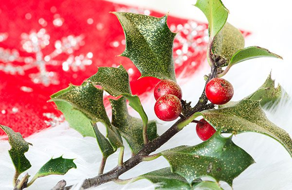 Holly Flower Christmas Decoration