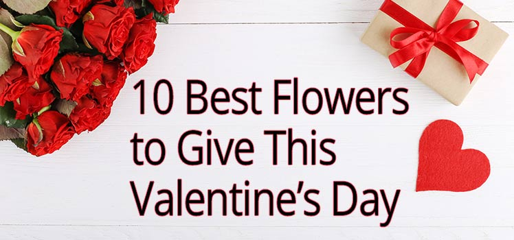 10 Flowers for Valentines Day