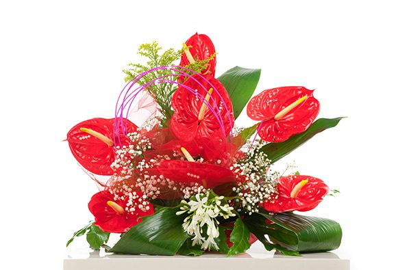 Valentines Day Anthurium