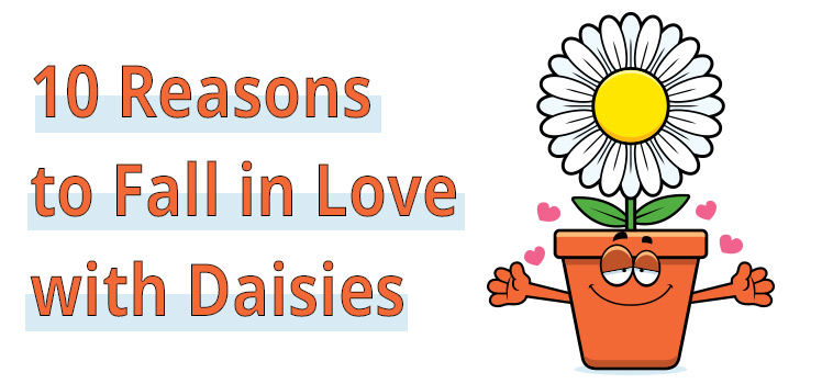 Great Reasons to Love Daisies