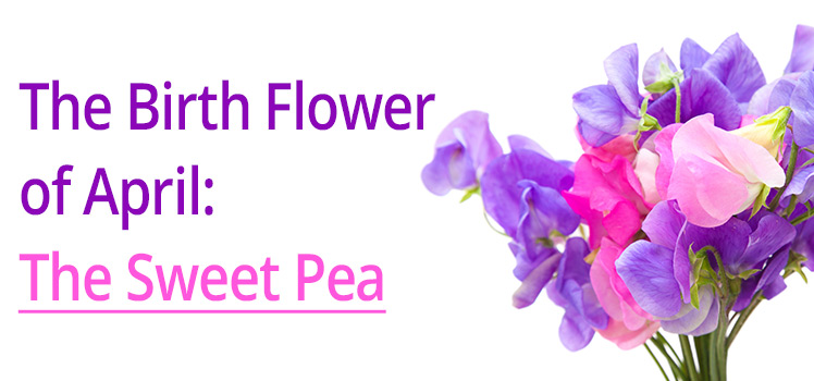 The Birth Flower Of April The Sweet Pea Lolaflora Blog